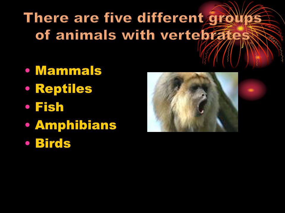 Mammals Reptiles Fish Amphibians Birds