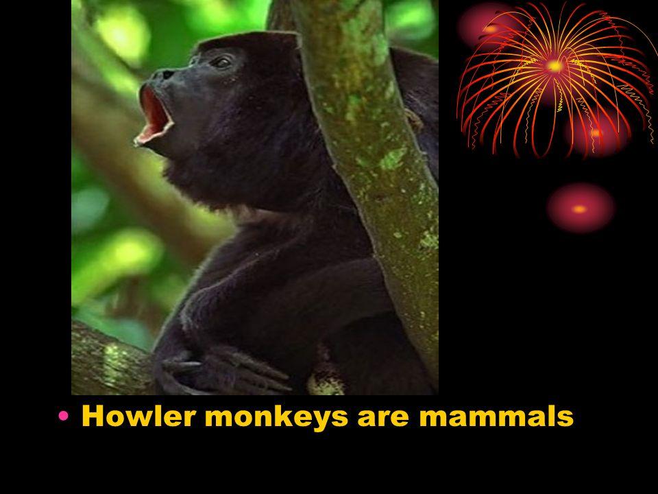 Howler monkeys are mammals