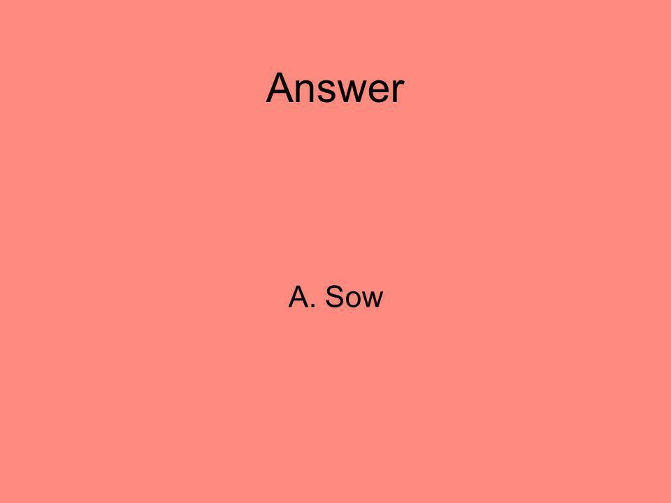 Answer A. Sow