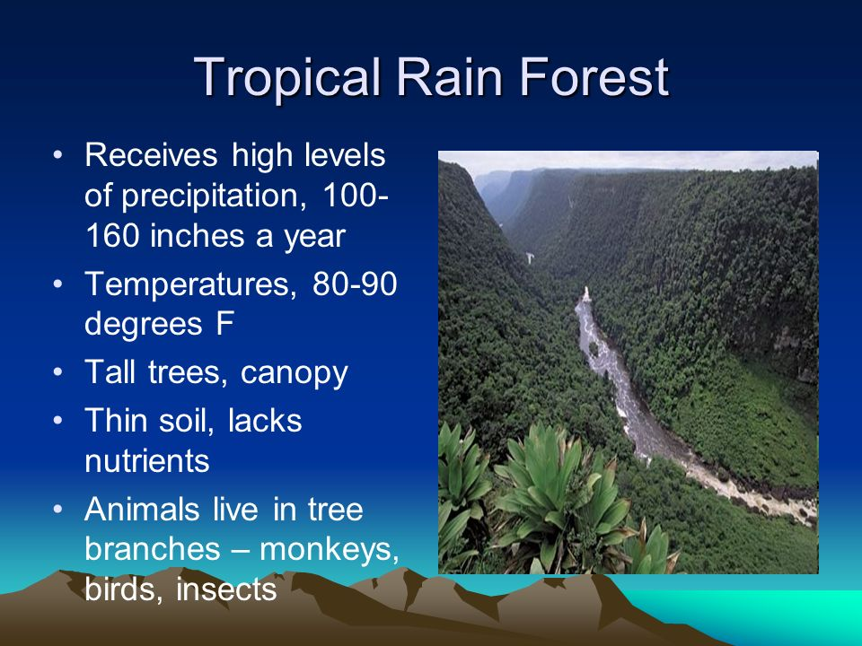 Tropical Rain Forest Receives high levels of precipitation, 100- 160 inches a year Temperatures, 80-90 degrees F Tall trees, canopy Thin soil, lacks n
