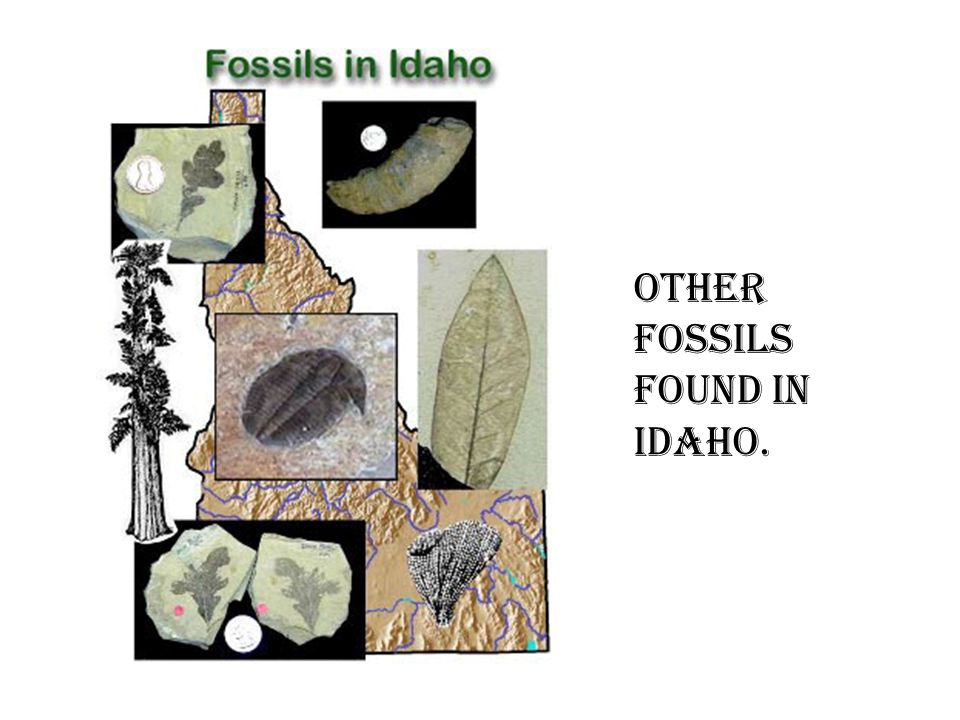 Other Fossils found in Idaho.