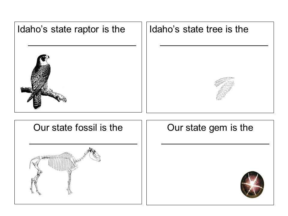 Idahos state raptor is the ____________________ Idahos state tree is the ____________________ Our state fossil is the ____________________ Our state gem is the ____________________
