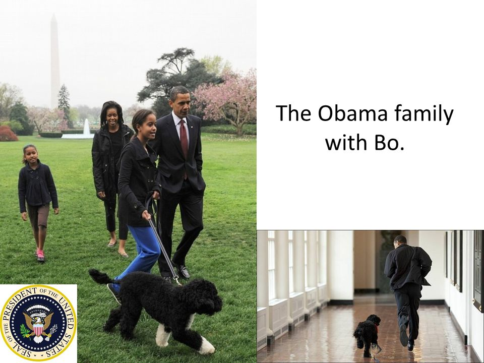 President Barack Obama's wife, First Lady Michelle Obama, Sasha and Malia Ann live in the White House on the second floor with their dog Bo.