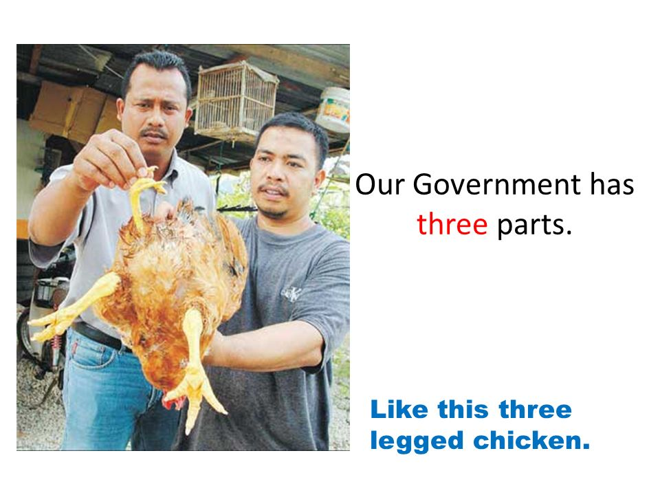 Our Government has three parts. Like this three legged chicken.