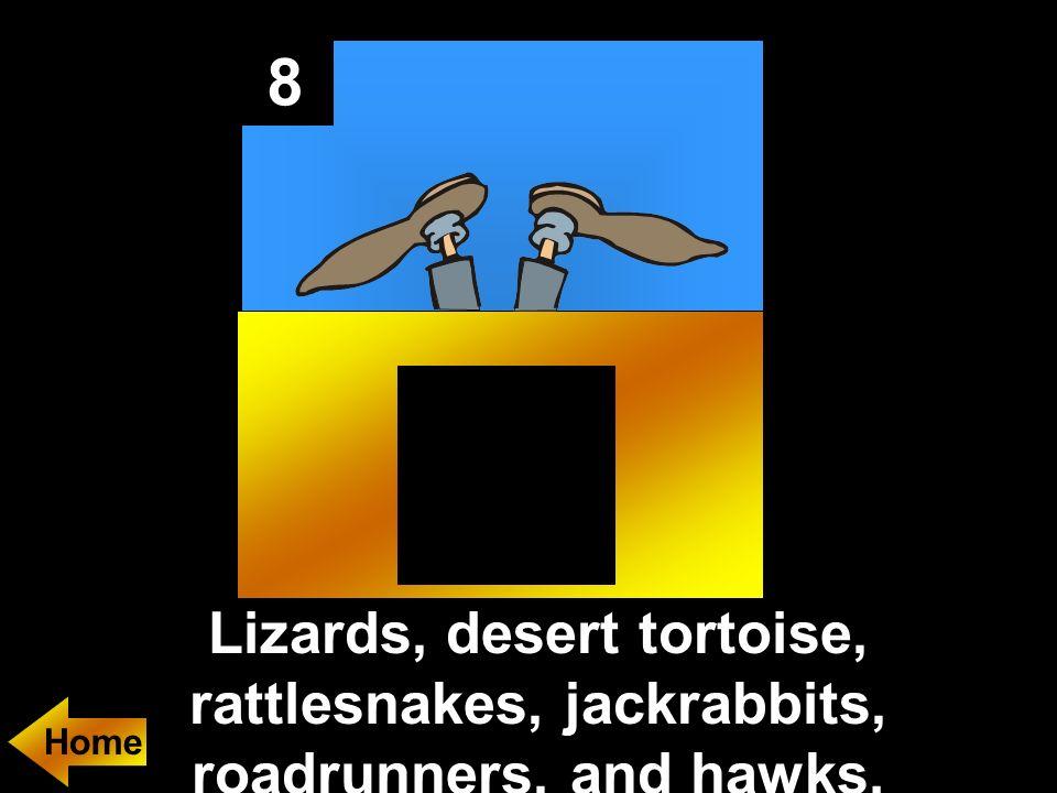 8 Lizards, desert tortoise, rattlesnakes, jackrabbits, roadrunners, and hawks.