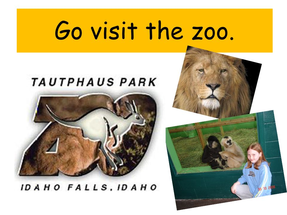 Go visit the zoo.