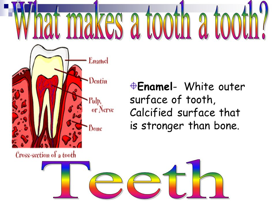 What are your teeth made of? Crown Enamel Dentin Pulp Root Gums Neck