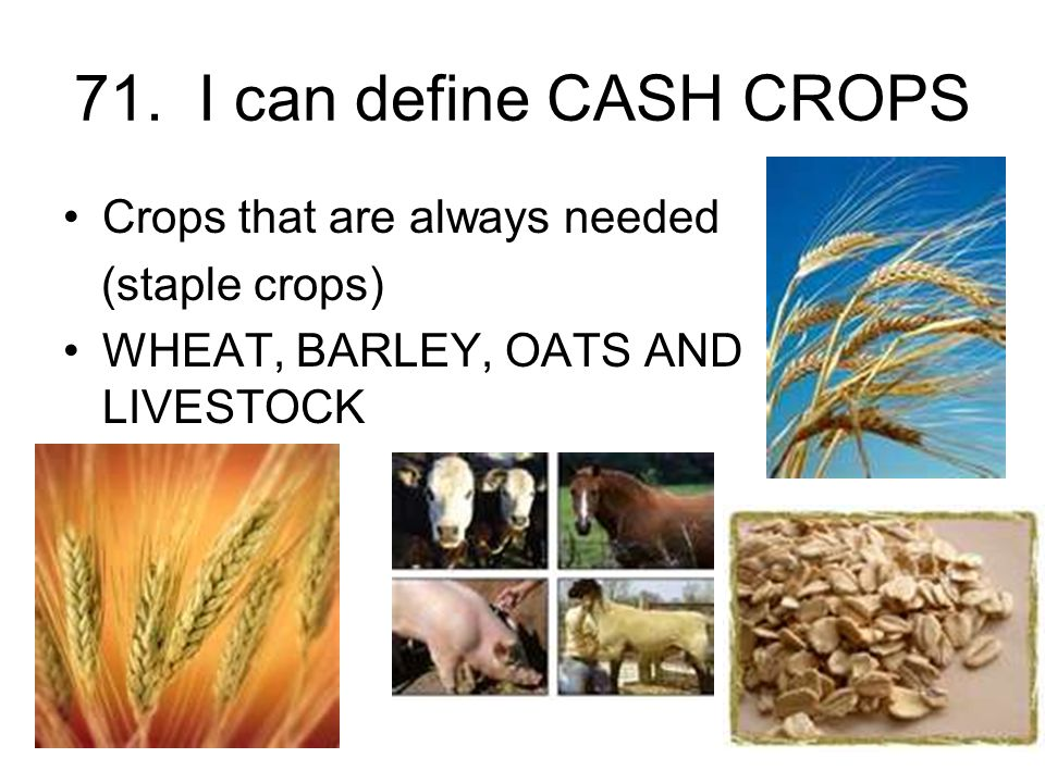71. I can define CASH CROPS Crops that are always needed (staple crops) WHEAT, BARLEY, OATS AND LIVESTOCK