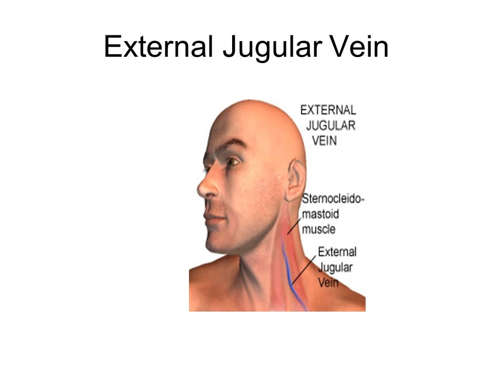 External Jugular Vein