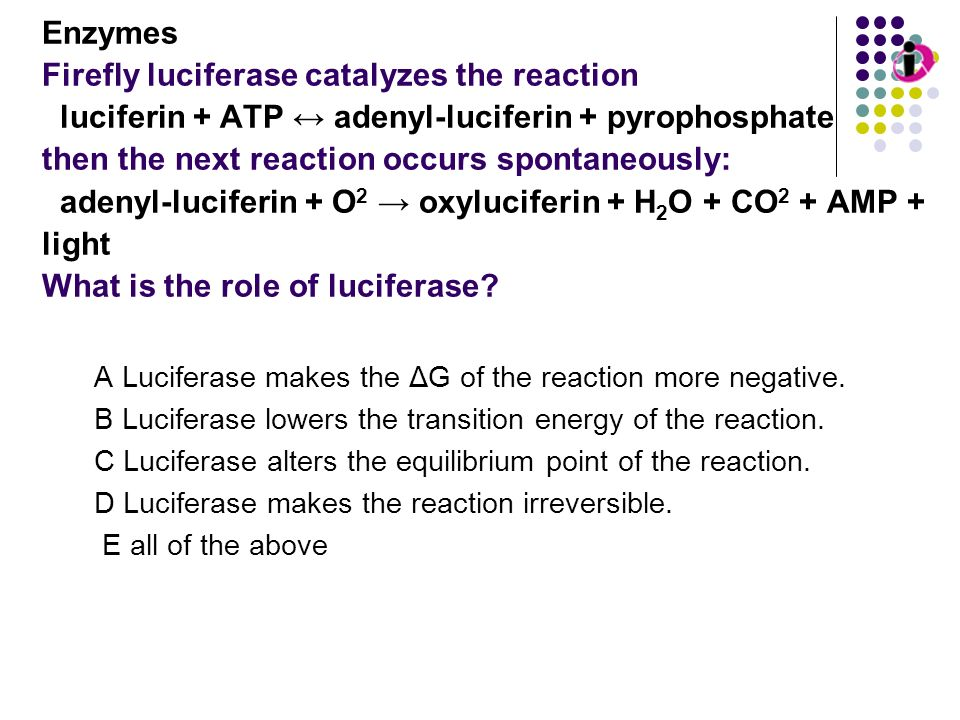 Enzymes Firefly luciferase catalyzes the reaction luciferin + ATP adenyl-luciferin + pyrophosphate then the next reaction occurs spontaneously: adenyl
