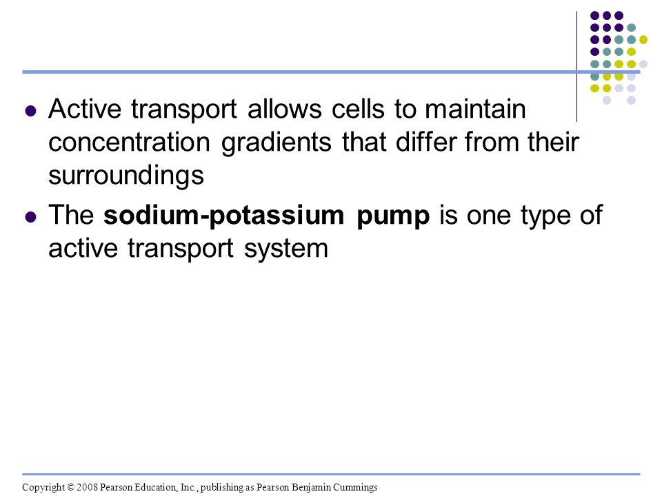 Active transport allows cells to maintain concentration gradients that differ from their surroundings The sodium-potassium pump is one type of active