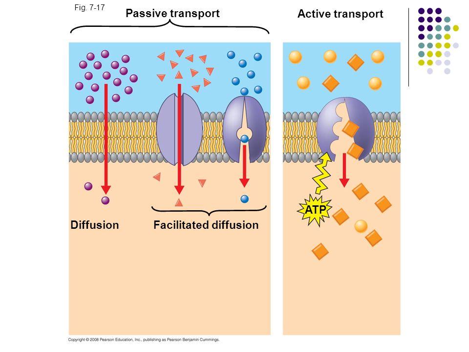 Fig. 7-17 Passive transport Diffusion Facilitated diffusion Active transport ATP