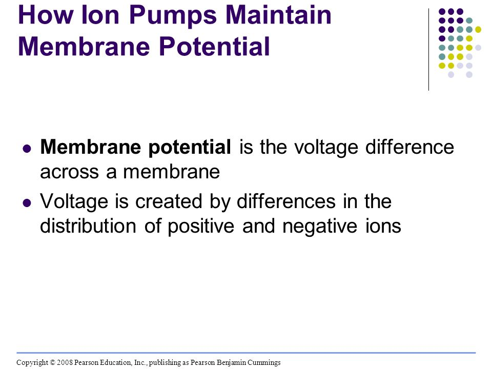 How Ion Pumps Maintain Membrane Potential Membrane potential is the voltage difference across a membrane Voltage is created by differences in the dist
