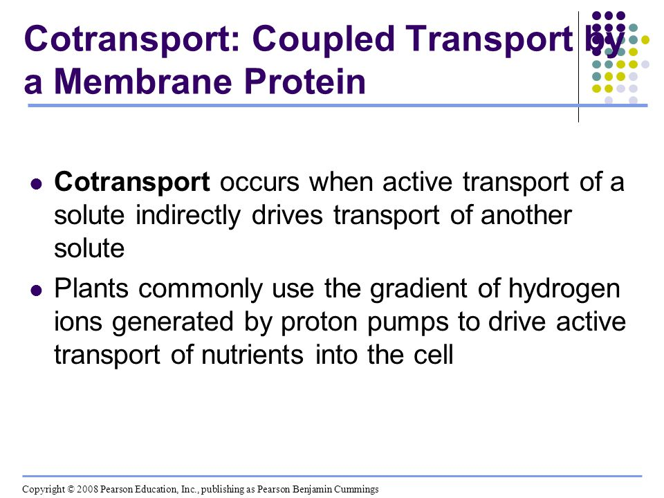Cotransport: Coupled Transport by a Membrane Protein Cotransport occurs when active transport of a solute indirectly drives transport of another solut