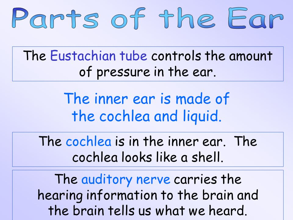 The three smallest bones in the body, the hammer, the anvil, and the stirrup, are in the middle ear. The hammer gets the vibrations from the eardrum,