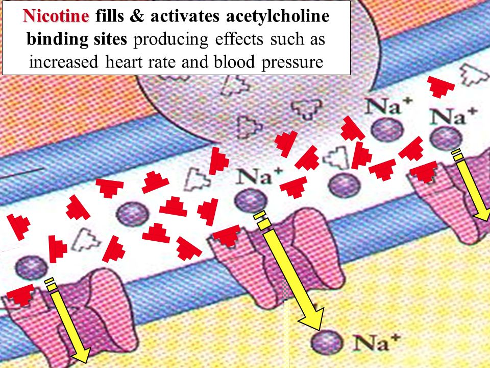 Cocaine Cocaine inhibits the re-uptake of dopamine producing effects such as increased heart rate and blood pressure