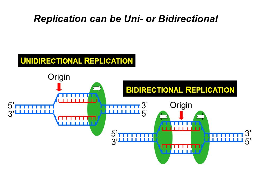 Replication can be Uni- or Bidirectional
