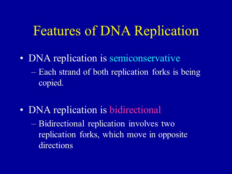 Features of DNA Replication DNA replication is semiconservative –Each strand of both replication forks is being copied.