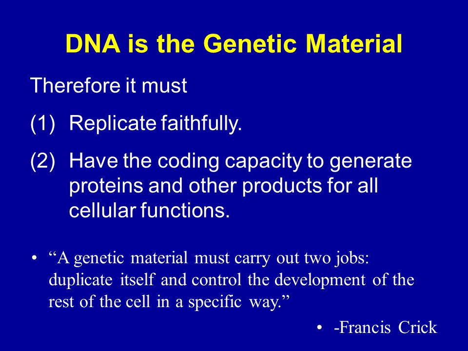 DNA is the Genetic Material Therefore it must (1)Replicate faithfully.