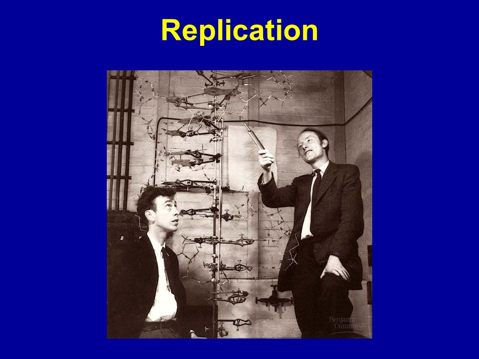 The Dawn of Molecular Biology April 25, 1953 Watson and Crick: It has not escaped our notice that the specific (base) pairing we have postulated immediately suggests a possible copying mechanism for the genetic material.