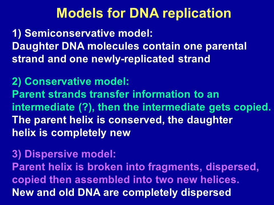 (a) Hypothesis 1: Semi-conservative replication (b) Hypothesis 2: Conservative replication Intermediate molecule (c) Hypothesis 3: Dispersive replication MODELS OF DNA REPLICATION
