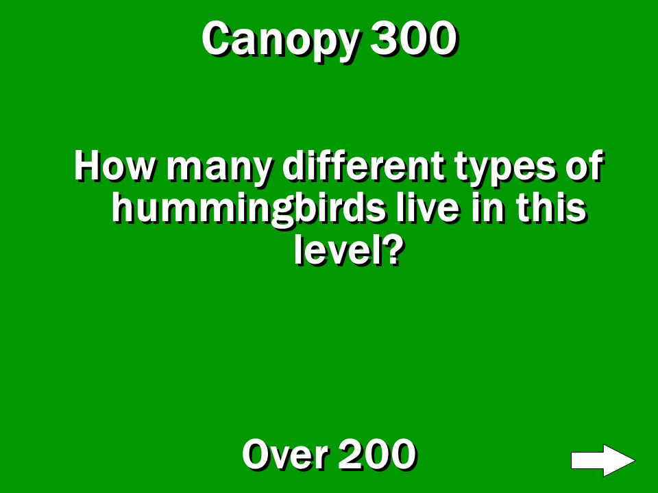 Canopy 200 Which animal has sticky fingers and toes? Red-Eyed Tree Frog