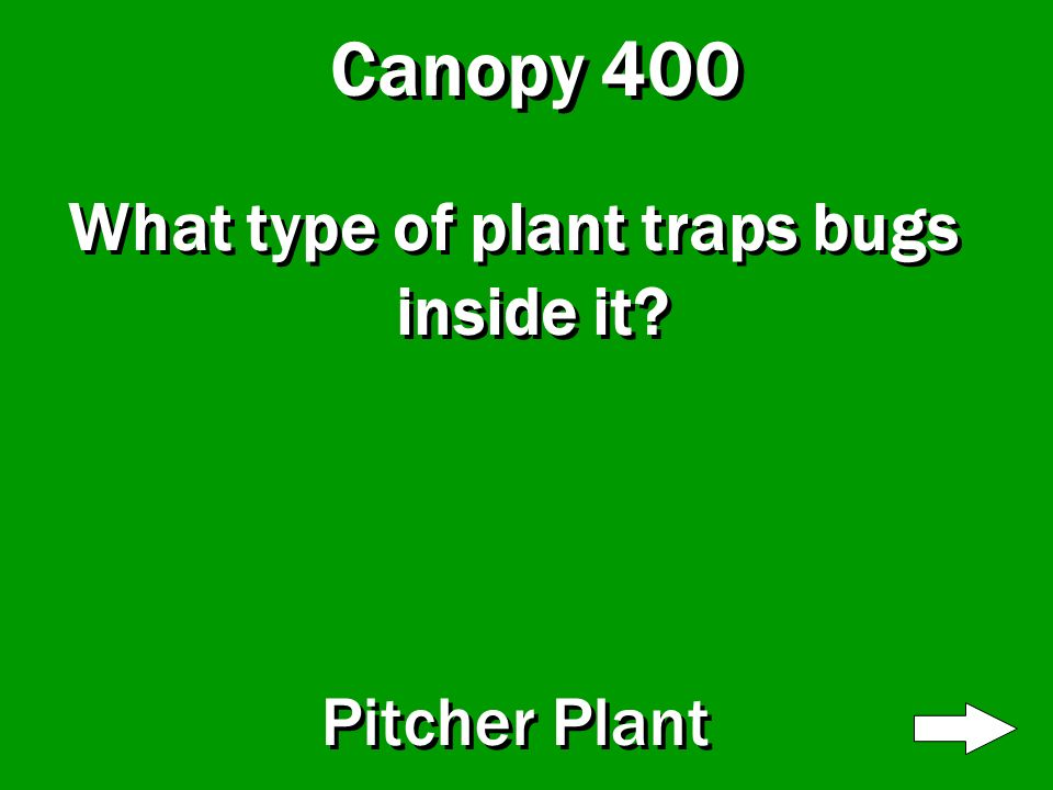 Canopy 300 How many different types of hummingbirds live in this level Over 200