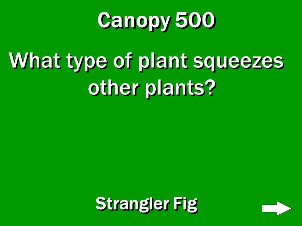 Canopy 400 What type of plant traps bugs inside it? Pitcher Plant