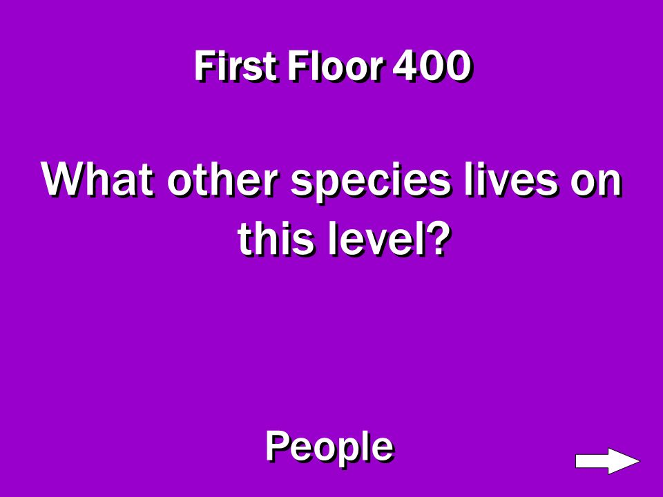 First Floor 300 Name two types of animals that live on this level Jaguars and Snakes