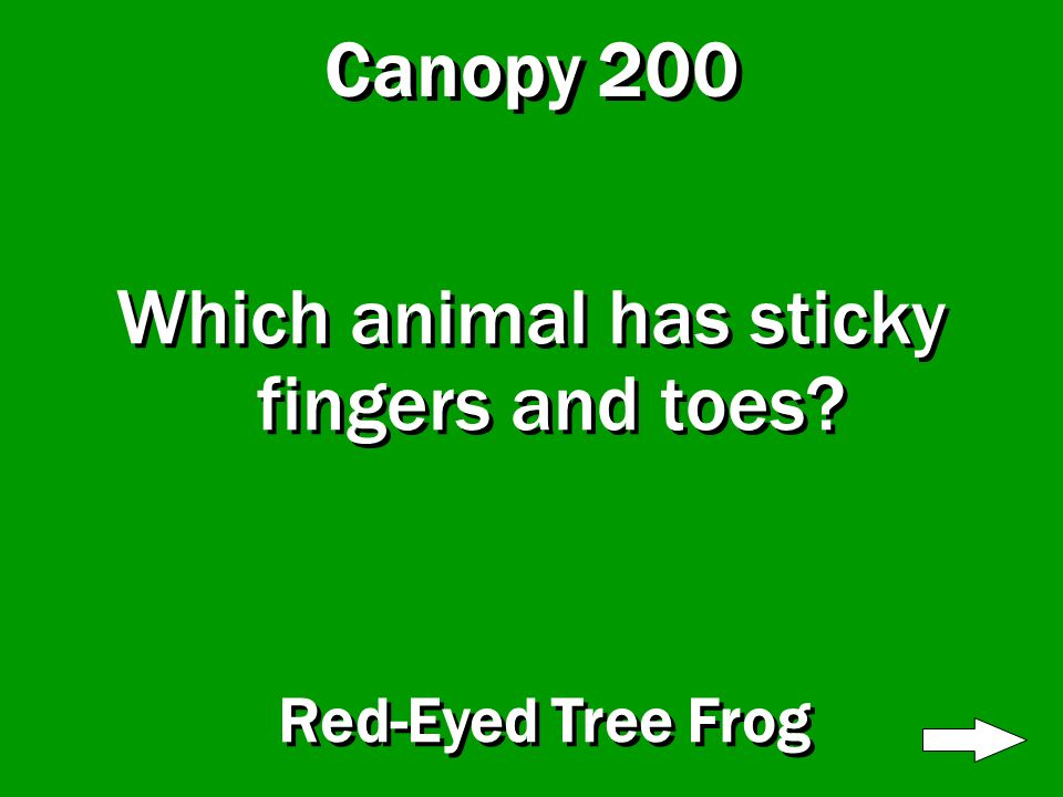 Canopy 100 What do the trees on this floor do? Keep rain and sun off other floors