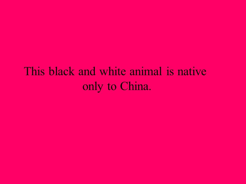 This black and white animal is native only to China.