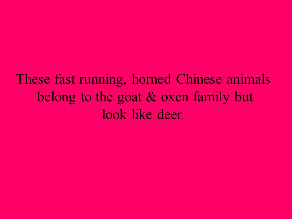 These fast running, horned Chinese animals belong to the goat & oxen family but look like deer.
