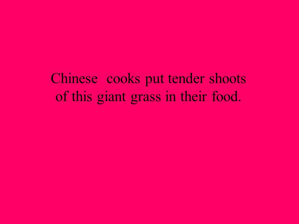 Chinese cooks put tender shoots of this giant grass in their food.