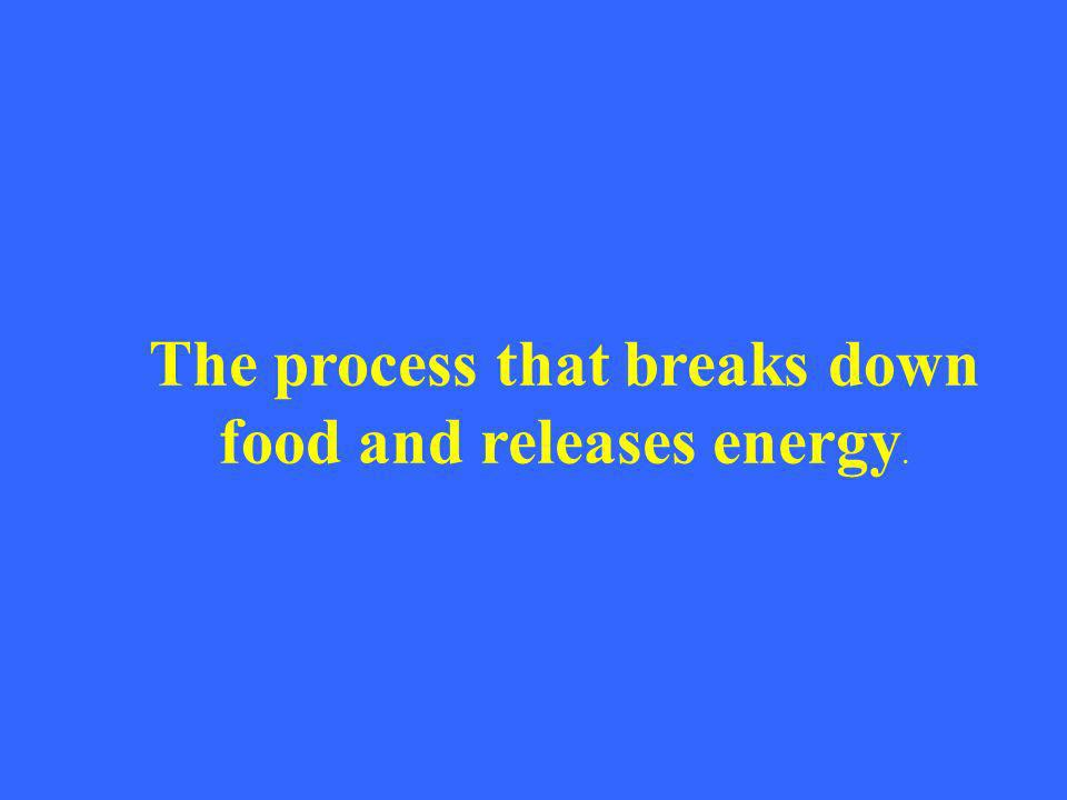 The process that breaks down food and releases energy.