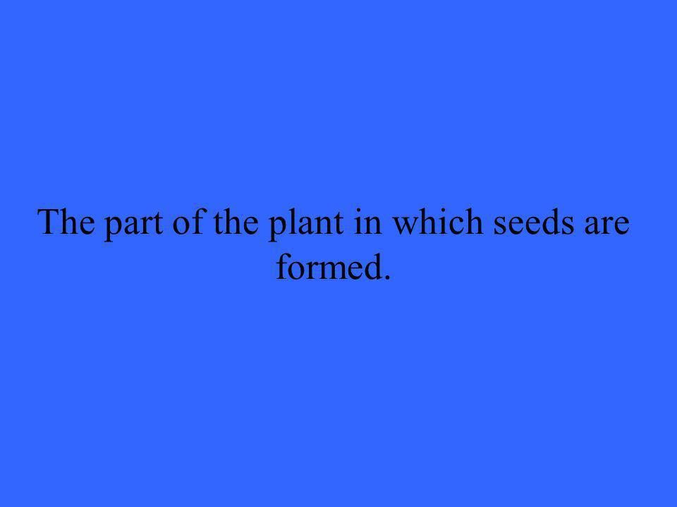 The part of the plant in which seeds are formed.