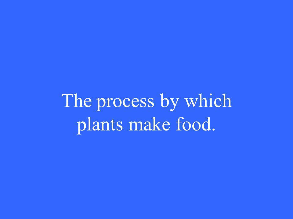 The process by which plants make food.