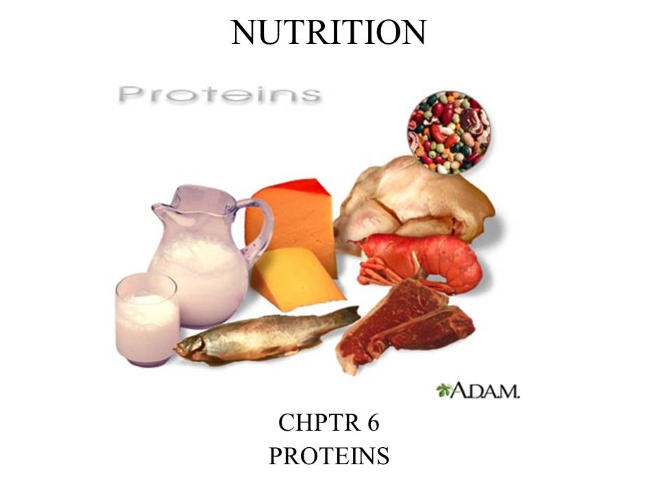 NUTRITION CHPTR 6 PROTEINS
