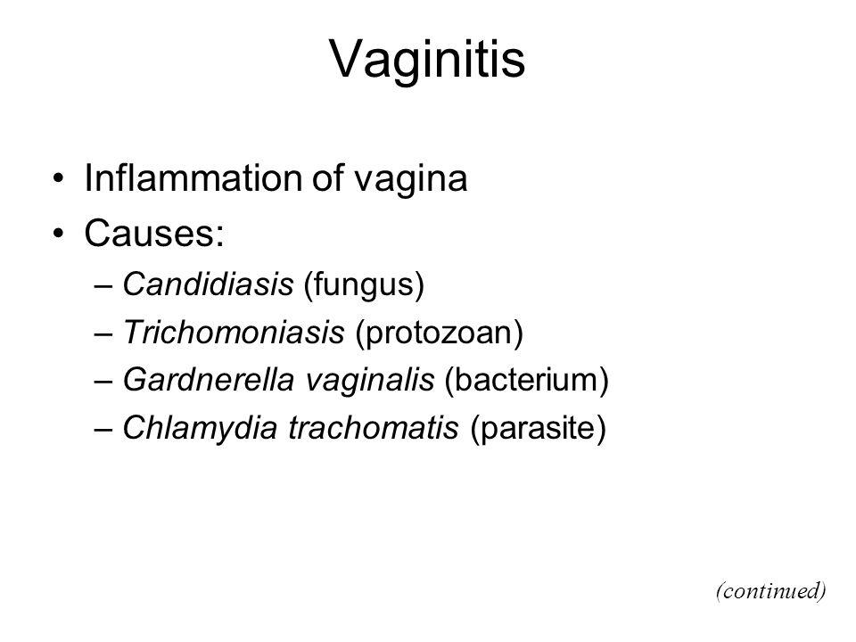Vaginitis Inflammation of vagina Causes: –Candidiasis (fungus) –Trichomoniasis (protozoan) –Gardnerella vaginalis (bacterium) –Chlamydia trachomatis (