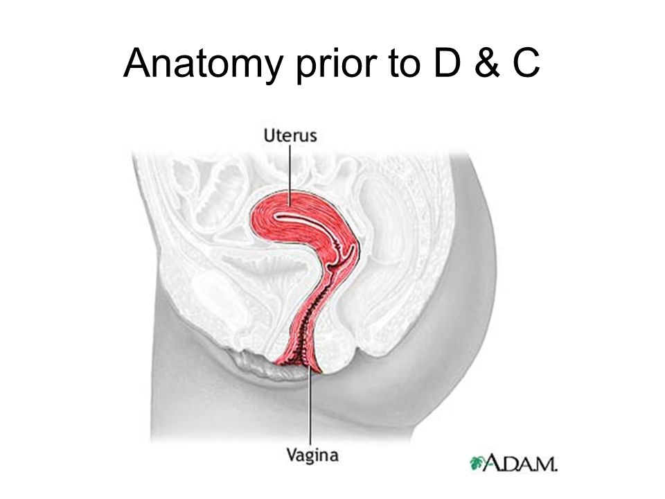 Anatomy prior to D & C