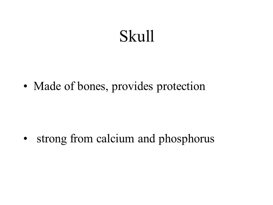 Skull Made of bones, provides protection strong from calcium and phosphorus