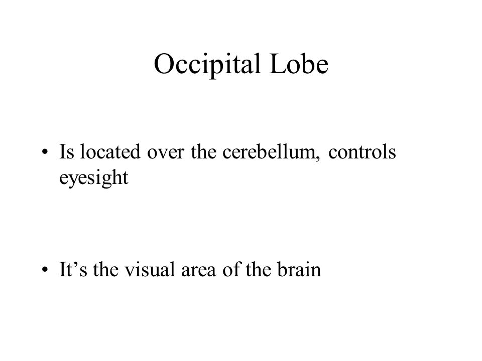 Occipital Lobe Is located over the cerebellum, controls eyesight Its the visual area of the brain