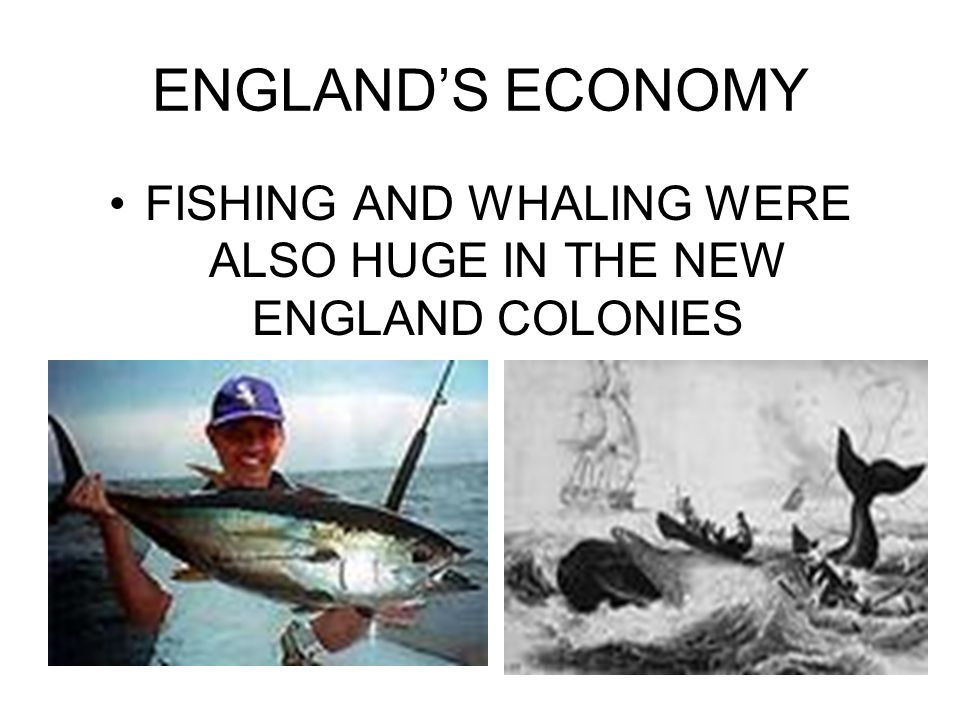 ENGLANDS ECONOMY FISHING AND WHALING WERE ALSO HUGE IN THE NEW ENGLAND COLONIES