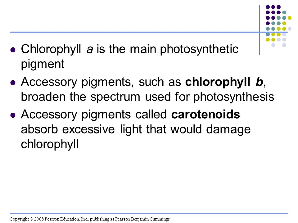 Chlorophyll a is the main photosynthetic pigment Accessory pigments, such as chlorophyll b, broaden the spectrum used for photosynthesis Accessory pig