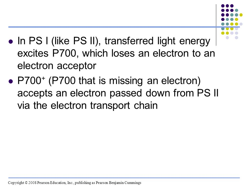 In PS I (like PS II), transferred light energy excites P700, which loses an electron to an electron acceptor P700 + (P700 that is missing an electron)
