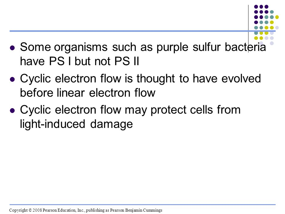 Some organisms such as purple sulfur bacteria have PS I but not PS II Cyclic electron flow is thought to have evolved before linear electron flow Cycl