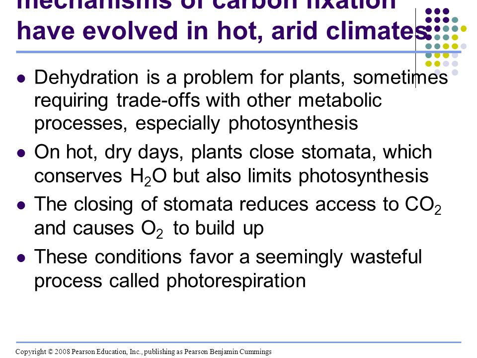 Concept 10.4: Alternative mechanisms of carbon fixation have evolved in hot, arid climates Dehydration is a problem for plants, sometimes requiring tr
