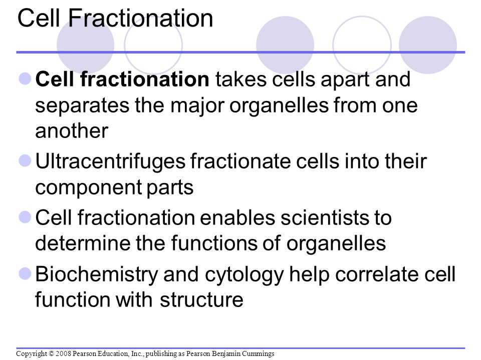 Cell Fractionation Cell fractionation takes cells apart and separates the major organelles from one another Ultracentrifuges fractionate cells into th