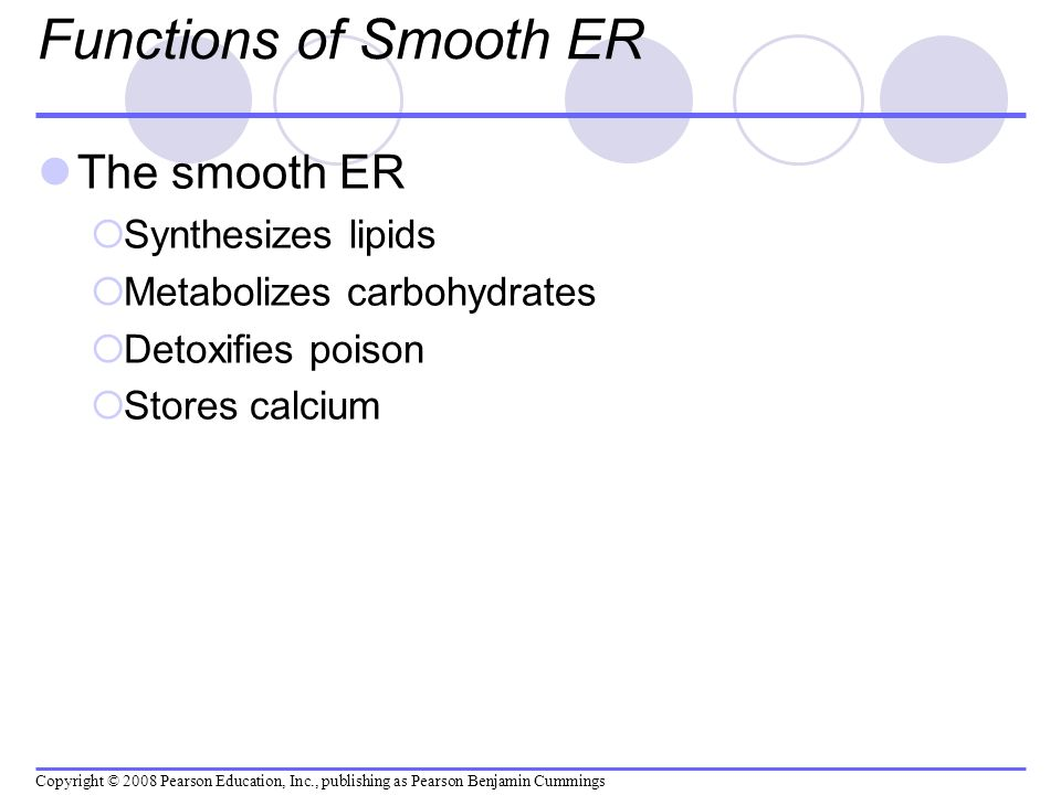 Functions of Smooth ER The smooth ER Synthesizes lipids Metabolizes carbohydrates Detoxifies poison Stores calcium Copyright © 2008 Pearson Education,