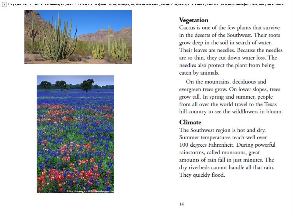 Cactus Texas Wildflowers