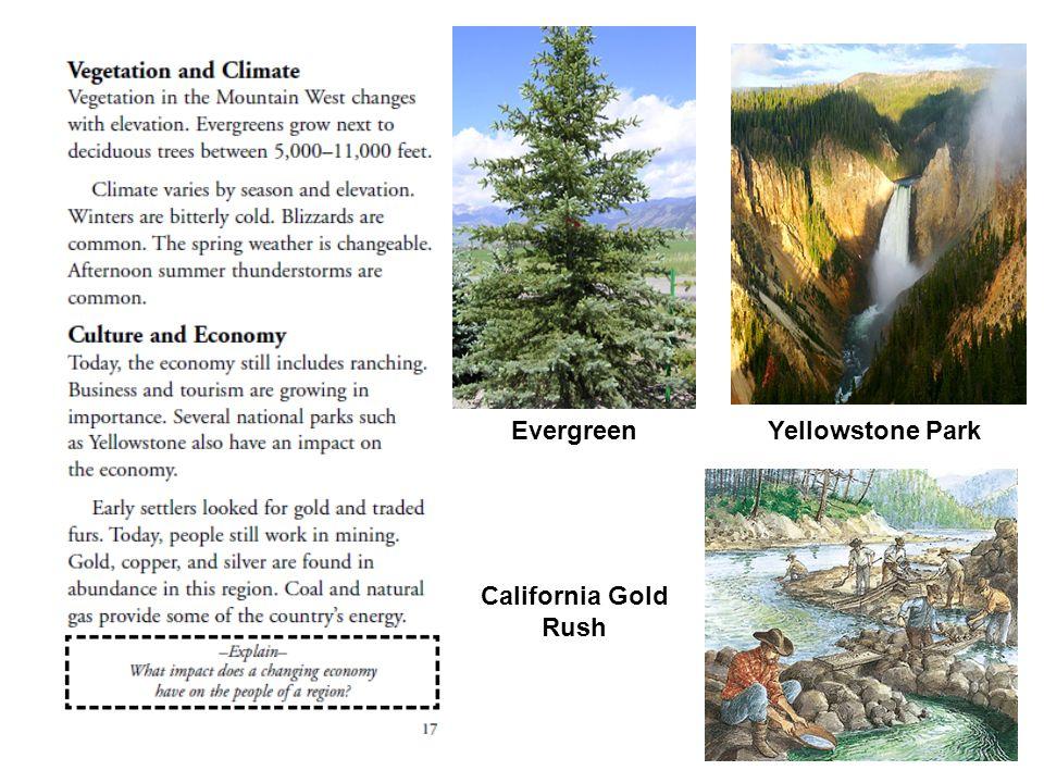 EvergreenYellowstone Park California Gold Rush